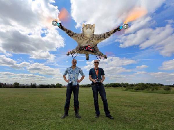 Setelah Buat Drone dari Kucing, Pria Ini Akan Buat Helikopter dari Sapi!