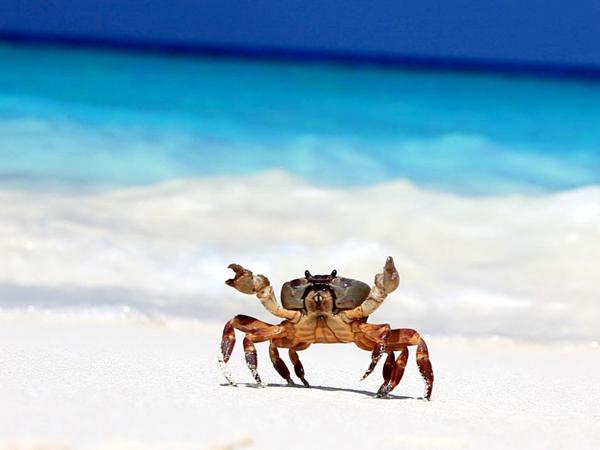 Tak Mau Dirusak, Pulau Cantik Ini Justru Akan Ditutup Sebagai Tempat Wisata