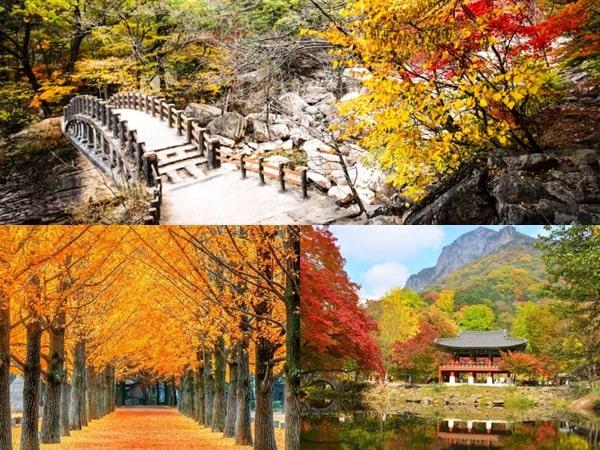 3 Destinasi Wisata Terbaik di Korea Untuk Menikmati Musim Gugur