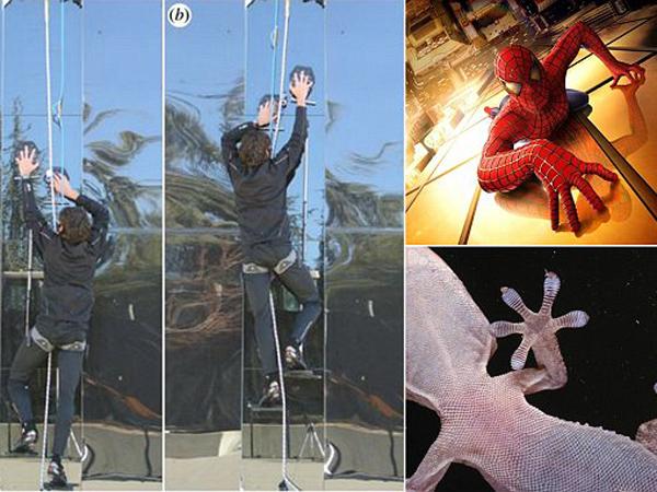 Terinspirasi Oleh Tokek, Ilmuwan Ini Ciptakan Alat Mendaki Bak Spiderman!