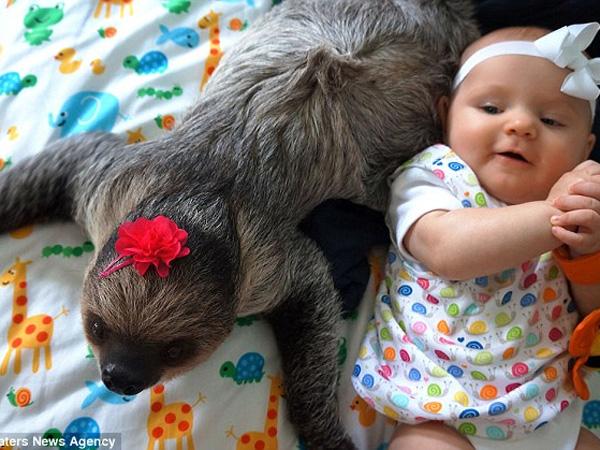 Gemasnya Bayi 5 Bulan Ini Bersahabat dengan Seekor Kukang!