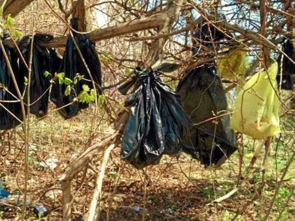Gantung 25 Bangkai Kucing di Pohon, Pria Ini Ditangkap