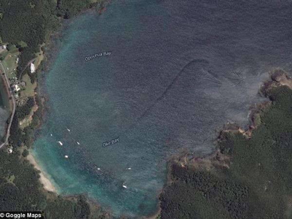 Makhluk Laut Misterius Raksasa Terlihat di Teluk Selandia Baru!