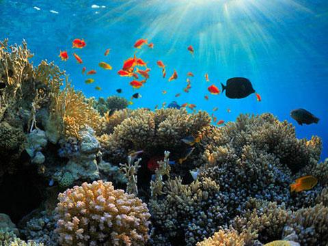 Duh, Penggunaan Tabir Surya Dilarang Karena Bisa Merusak Perairan Laut?