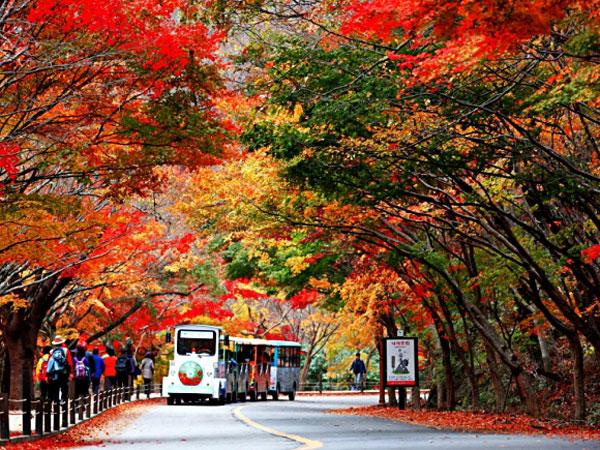 Alasan Mengapa Musim Gugur Jadi yang Terbaik Untuk Liburan ke Korea