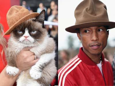 Lucunya, Kucing Bergaya Pharrell William Jadi Tamu VIP di MTV Movie Awards!