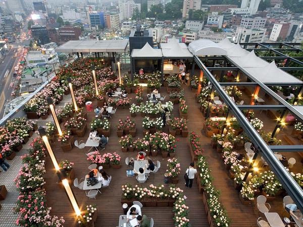 Kencan Bertambah Manis di 'Taman Langit' Sky Rose Garden Kota Seoul
