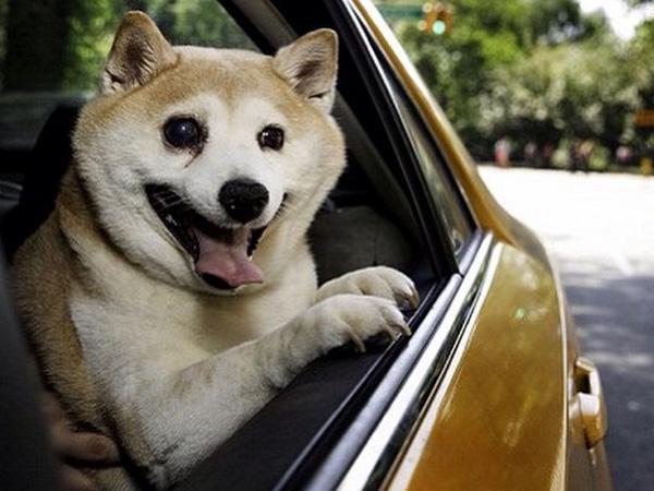 Derita Sakit Parah, Anjing Paling Bahagia di Dunia Ini Selalu Tunjukkan Wajah Tersenyum!