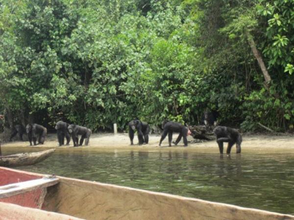 Tak Hanya di Film, 'Planet of the Apes' Juga Ada di Kehidupan Nyata!