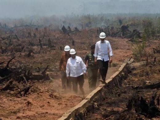 Duh, Presiden Jokowi Divonis Atas Perkara Kebakaran Lahan di Palangkaraya!