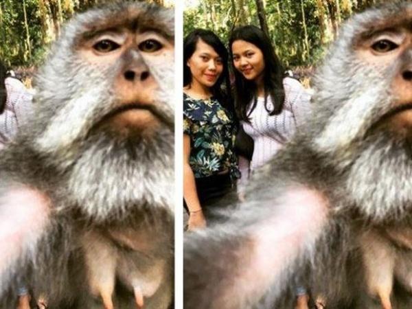 Viral Monyet 'Selfie' Bareng Pengunjung di Bali, Terungkap Cara Membuatnya