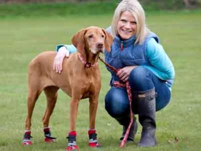 Alergi, Anjing Ini Gunakan Sepatu Khusus