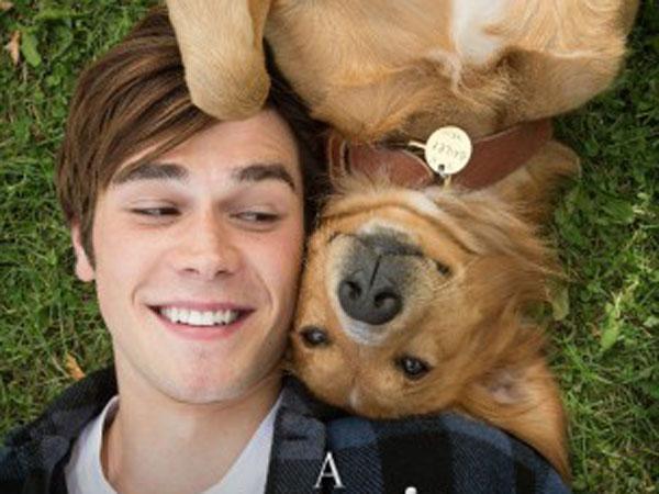 A Dog's Purpose: Kisah Perjalanan Seekor Anjing yang Mencari Arti Tujuan Hidupnya