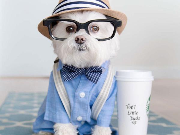 Menggemaskan! Anjing Ini Jadi Celebgram Dengan Puluhan Ribu Followers