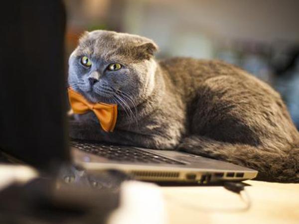 Jadi Manager Toko Online, Kucing Ini Digaji Jutaan Rupiah