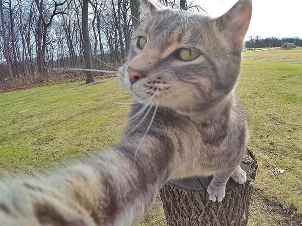 Menggemaskan! Kucing Ini Juga Suka Selfie