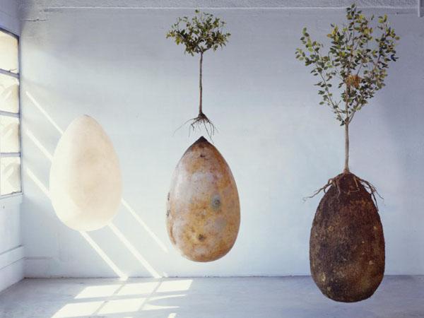 'Capsula Mundi' Peti Jenazah Organik yang Bisa Ubah Jenazah Jadi Pohon