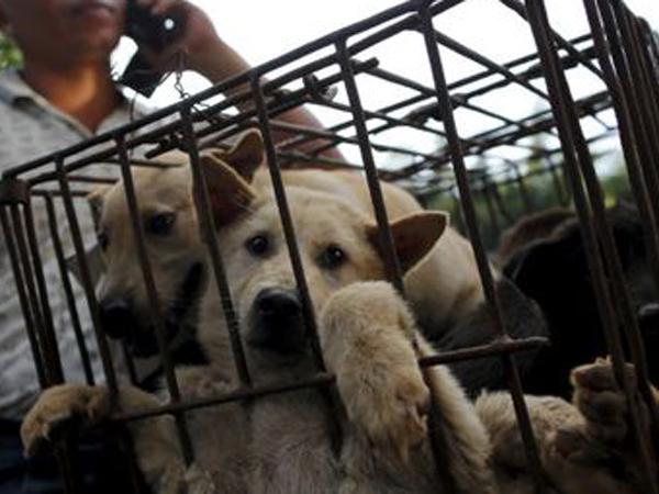 Dikecam Dunia, Festival 'Pembantaian' Anjing, Yulin Tetap Digelar