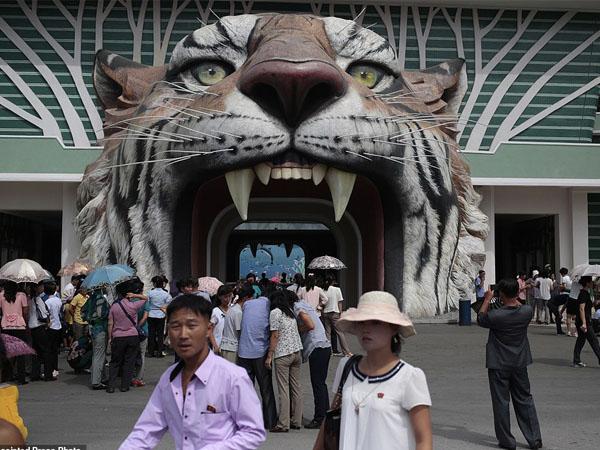 Bukan Singa atau Macan Tutul Ternyata Ini Atraksi Utama Kebun Binatang Di Korea Utara, Penasaran?
