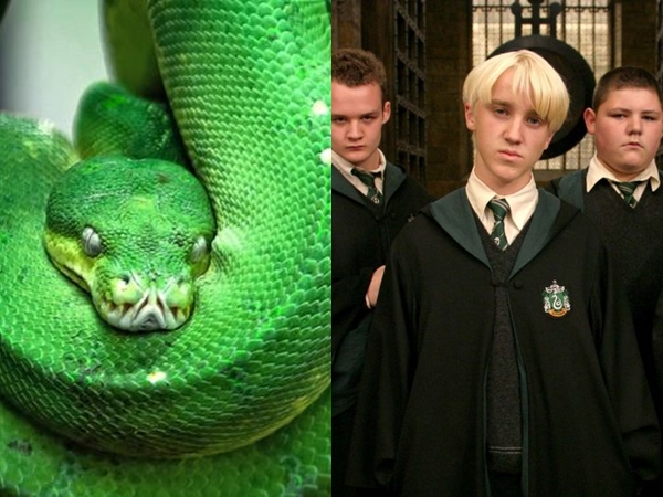Spesies Baru, Nama Ular Ini Terinspirasi Dari Salah Satu Karakter Pendiri Asrama di Harry Potter
