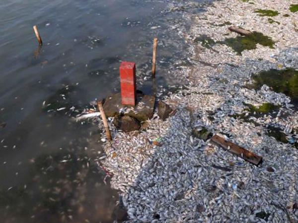 Penyebab Jutaan Ikan Mati Belum Diketahui, Aktivitas di Pantai Ancol Dibatasi