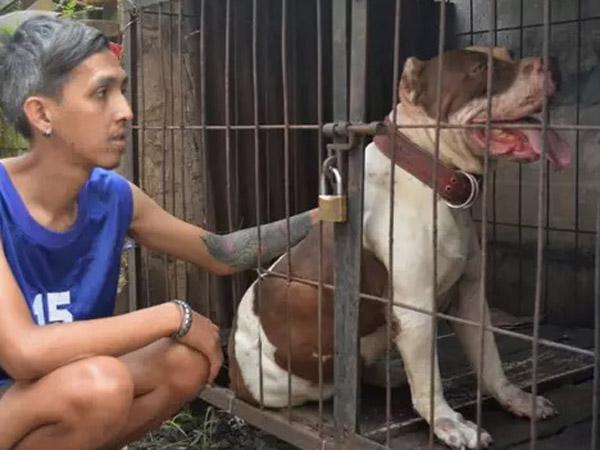 Anjing Pitbull Penggigit Bocah hingga Tewas Diminta untuk Dieksekusi Mati?