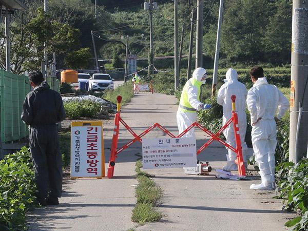 Waspada Wabah Demam Babi Afrika, Sejumlah Festival dan Objek Wisata Korea Selatan Ditutup