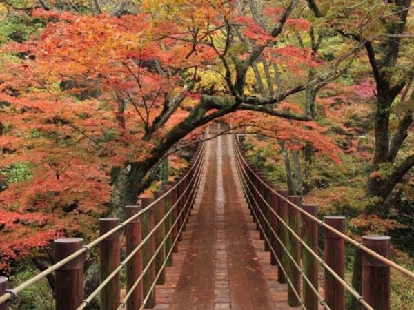 Sambut Musim Gugur, Yuk Cari Tahu Tempat Wisata yang Menarik di Jepang