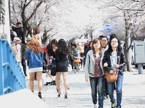 Menikmati Kehangatan dan Cantiknya Musim Semi di Taman Yeouido Hangang