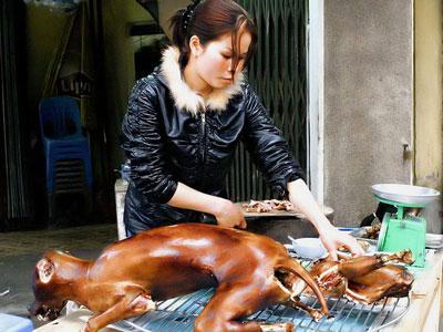 Dikecam, Festival Daging Anjing Berlanjut