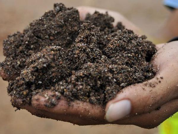 Apa Sih 'Mineral Rare Earth' yang Gencar Dibahas Luhut dan Prabowo?