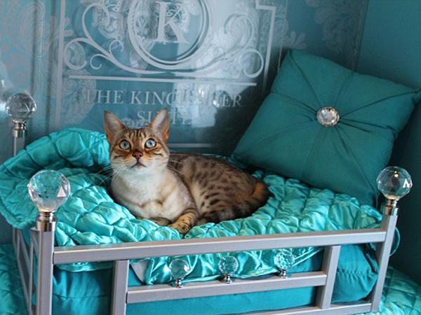 Inilah Hotel Bintang Lima Pertama Bagi Kucing yang Tawarkan Fasilitas Mewah