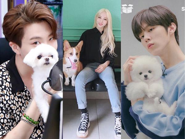 MBC Akan Garap ISAC Versi Anjing Peliharaan Idola K-Pop, Ada 11 Tim