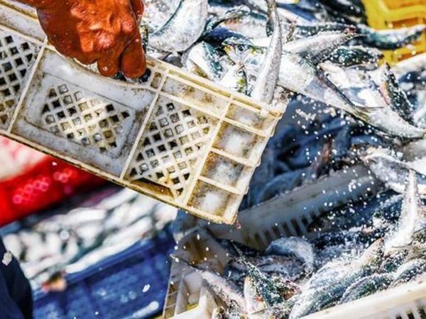 Klaster Pasar Seafood, 1000 Orang Positif Covid-19