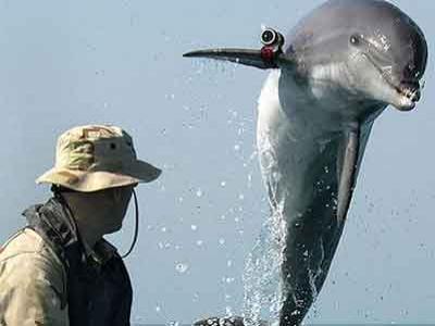 Wow, Lumba-lumba Dilatih Bertempur oleh Militer Ukraina