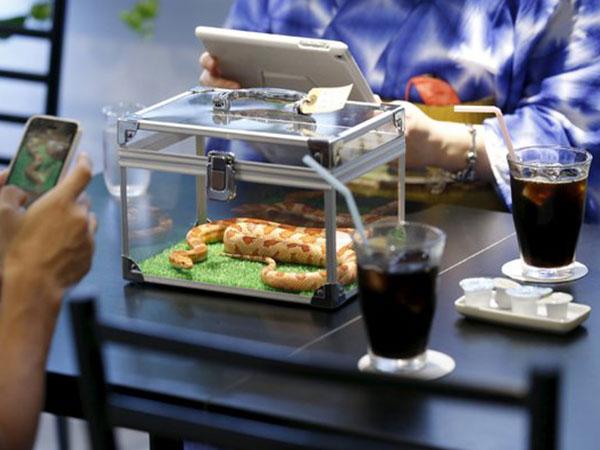 Rasakan Sensasi Minum Kopi di Kafe Tokyo Bersama Ular, Berani?