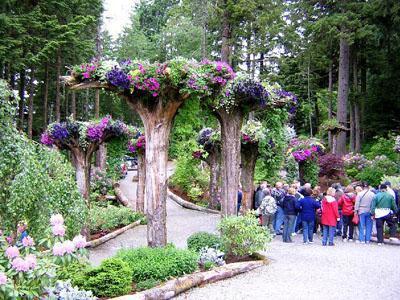 Uniknya, Pepohonan di Taman Cantik Ini Bisa Terbalik!