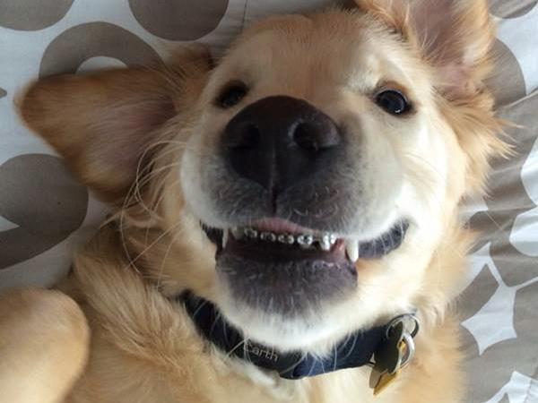 Yuk, Kenalan Dengan Anjing Lucu yang Berbehel Ini