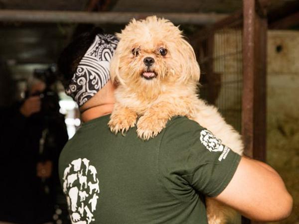 103 Anjing Diselamatkan Dari 'Pembantaian' Peternakan Penyedia Daging Di Korsel