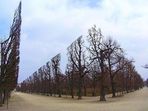 Unik, Pohon di Istana Ini 'Dipahat' Jadi Gerbang Masuk Yang Sangat Simetris!
