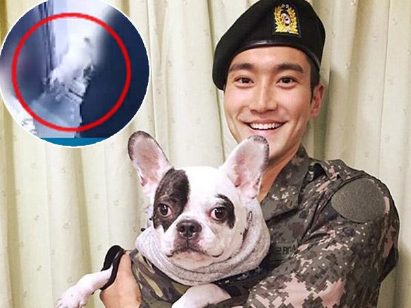 Dirilis Rekaman CCTV Detik-detik Anjing Peliharaan Siwon Serang Korbannya