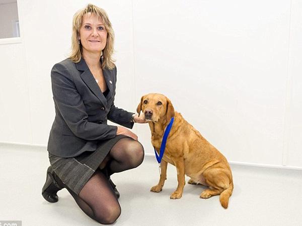 Temukan Penyakit Kanker pada Lebih dari 500 Pasien, Anjing Ini Diberi Medali!