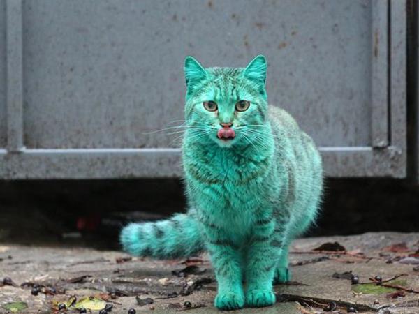 Wah, Kucing Hijau Misterius Dilaporkan Muncul di Bulgaria!