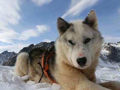 Wow, Taksi Anjing di Norwegia Tawarkan Tarif Fantastis!