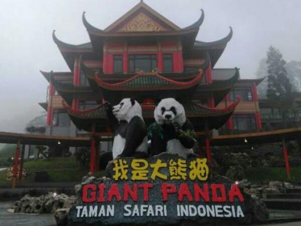 Fauna Khas China Siap Huni Taman Safari Bogor September Mendatang