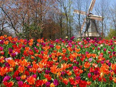 Inilah 5 Kebun Paling Cantik di Dunia!
