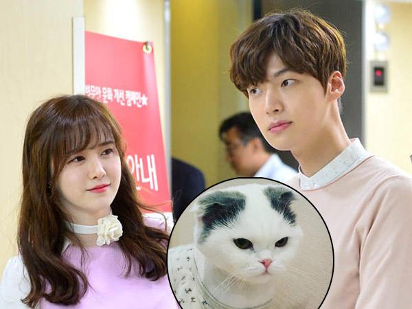 Perkara 'Hak Asuh' Kucing Juga Jadi Masalah Perceraian Goo Hye Sun dan Ahn Jae Hyun