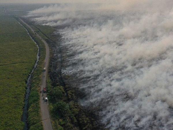 Kebakaran Kalimantan Darurat Asap, Apa Kabar Lokasi Ibu Kota Baru Indonesia?