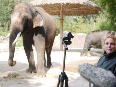 Wah, Gajah Ini Bisa Bahasa Korea!!