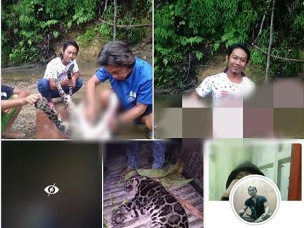 Geger Foto-foto Warga Kuliti Hewan Langka Diduga Macan Dahan yang Sekejap Viral